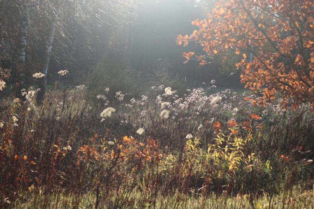 #waswar im November – Monatsreview – Make today amazing